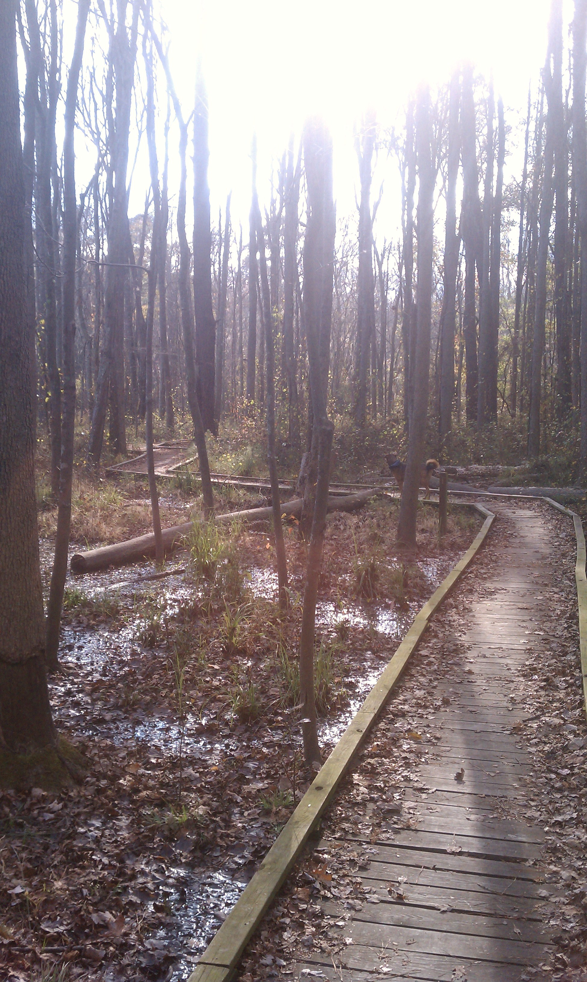 Phinizy Swamp Nature Park Trail